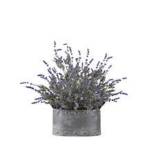 "24.5""H- Lavender Planter, 8822830"