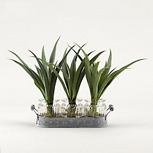 "12""H- Green Lily Grass, 8822808"