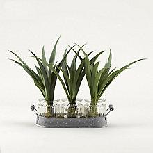"12""H- Green Lily Grass, 8822808"