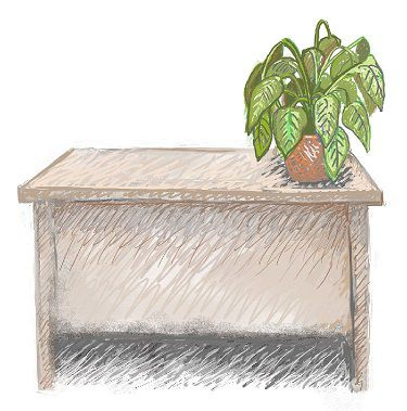 Adding Plants to Your Office