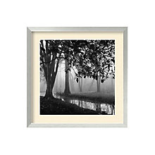 Framed Photography Print- Woodland Number 1 by Nicholas Bell, 8801440