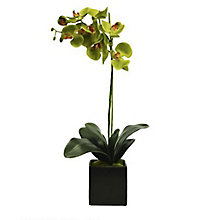 "Single 25""H Green Orchid, 8813492"