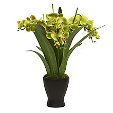 "Large 26""H Green Orchid Arrangement, 8813493"