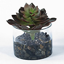 "7""H Burgundy Succulent in Glass Container, 8813497"