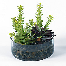 "9""H Succulent Garden in Glass Container, 8813498"