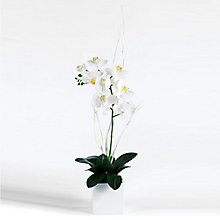 "32""H White Orchid in Cube, 8813501"