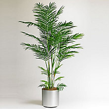 6'H Potted Areca Palm Tree, 8813520