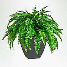 2'H Artificial Potted Fern, 8813529