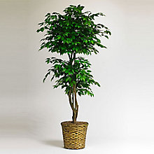 6'H Faux Ficus with Woven Basket, 8813515