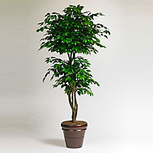 6'H Potted Faux Ficus, 8813516