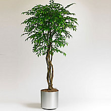 6'H Smilax Tree, 8813512