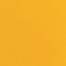 Marigold Marigold Swatch