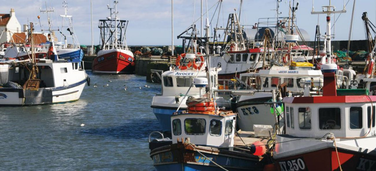Fishing boats in the East Neuk dock