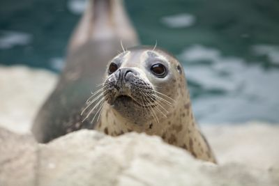 Seal at St Andrews Aquarium