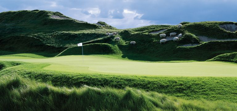The green and flag stic with sheep in the background of the eleveth hole of the Irish Course.