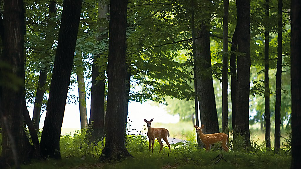 Meadow Valleys at Blackwolf Run woods deer
