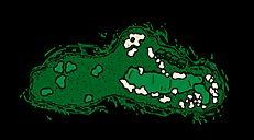 Straits Hole 6 Gremlin's Ear Layout