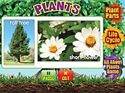 Plants Interactive Activities
