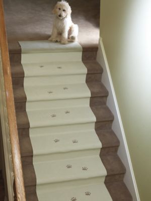 Plastic Carpet Covers For Stairs Www Allaboutyouth Net